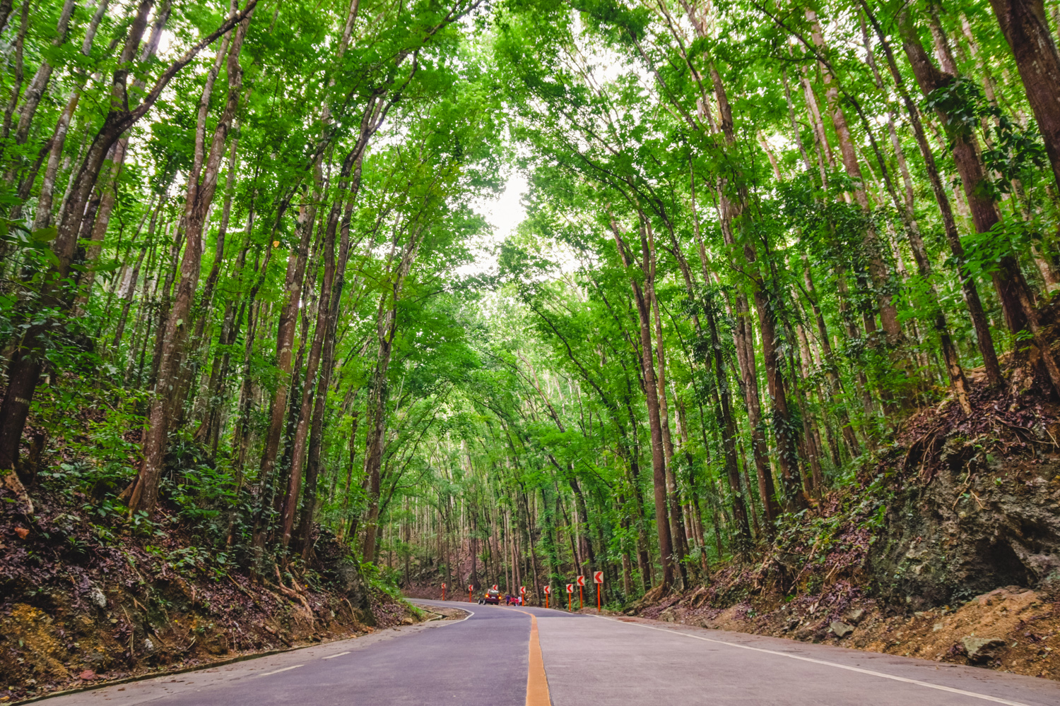 Tour Of Cebu And Bohol In Philippines